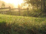 Sun on fence and tall grass