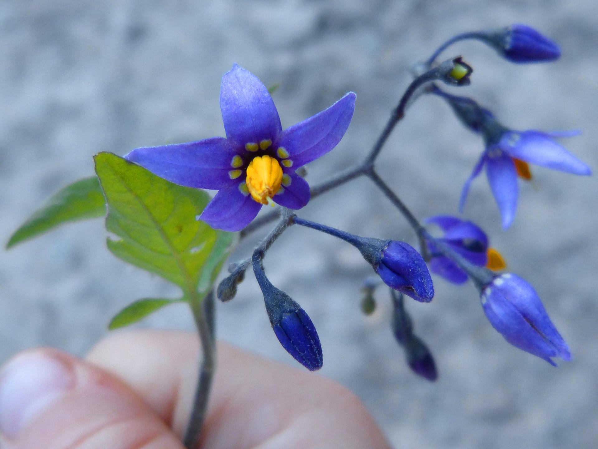 flower-958355_1920