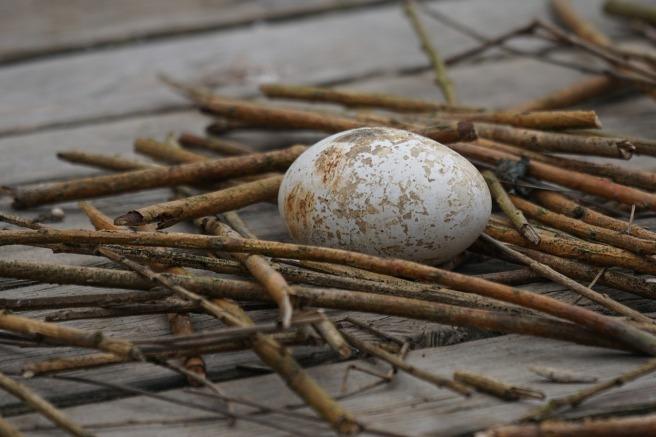 egg-1288987_1280