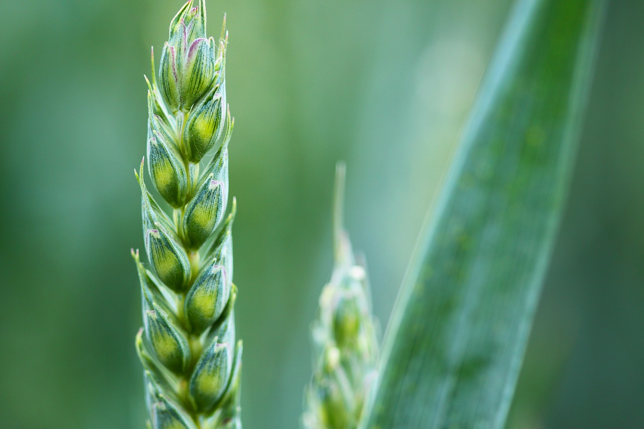 agriculture-2229_1280