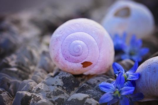 shell-756724_640