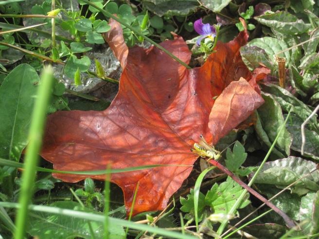 Fall Leaf for Lectio